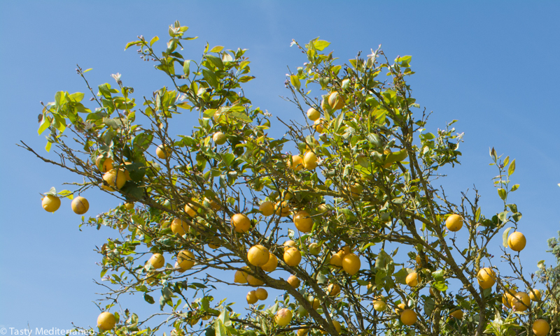 tasty-mediterraneo-lemon-tree