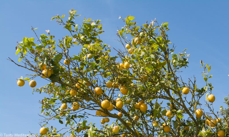 tasty-mediterraneo-lemon-tree