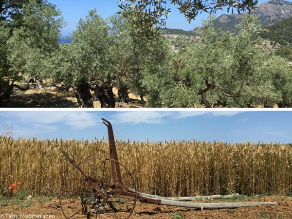 Tasty-Mediterraneo-Majorca_
